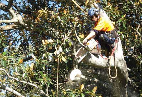 The Top-Handled Chainsaw - Training For Trees